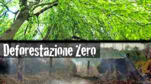 Deforestazione-Zero