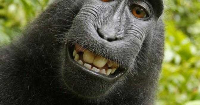 Happy Hour, riflessioni dopo lo Spritz: un selfie bestiale finisce in tribunale!