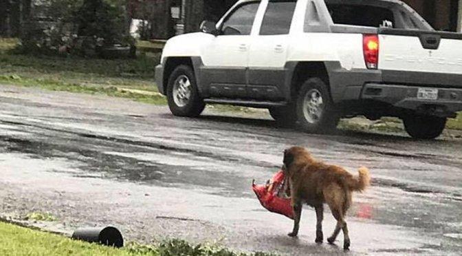 L'insegnamento del cane Otis per la nostra comunicazione!
